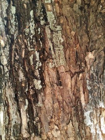 old bark tree texture 版權商用圖片
