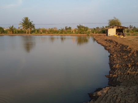 fish pond: fish pond in country Thailand Stock Photo