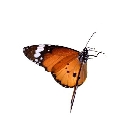 butterfly on white background Imagens