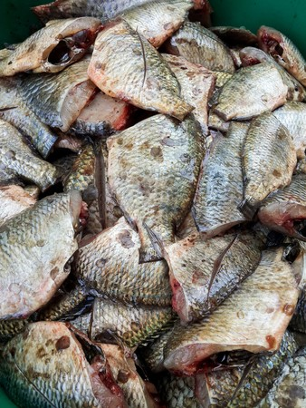 oreochromis: Oreochromis niloticus fish for cooking
