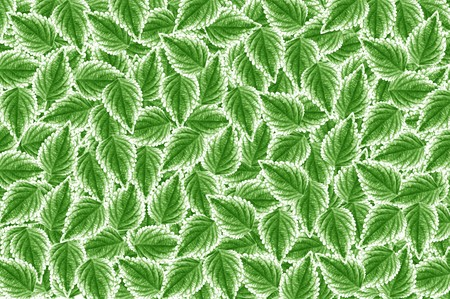 green background: green leaves pattern background Stock Photo
