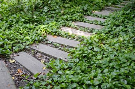 weed block: nature path in nature garden thailand