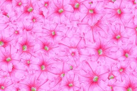 adenium obesum: art pink Adenium obesum flower pattern illustration background