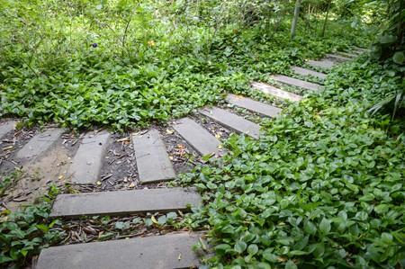 weed block: path in nature garden thailand