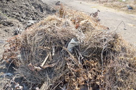sere: dry plants on the ground