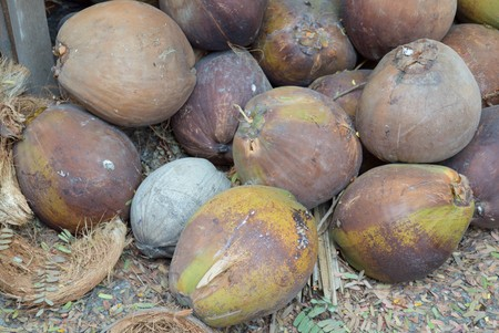 dry coconut on the ground