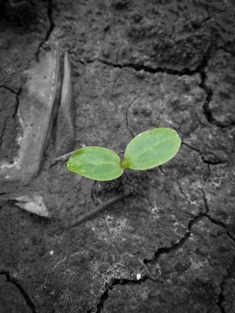 green sprout Stok Fotoğraf