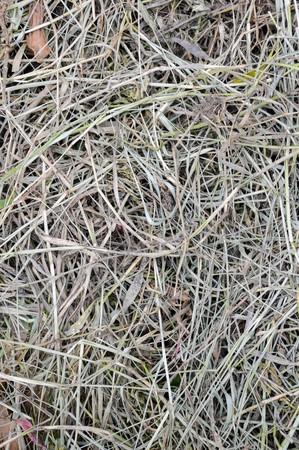 dry lemongrass leaves on the ground