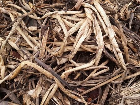 dry Eichhornia crassipes plants for agriculture Banco de Imagens