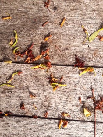 dry leaves on wood floor Stock Photo