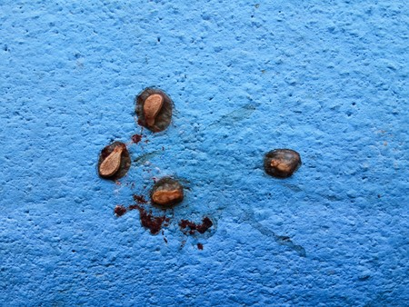seeds plants form bird shit on blue floor