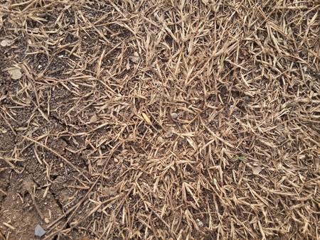 dry grass on the ground Stok Fotoğraf