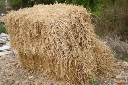hayrick: dry straw on the ground Stock Photo
