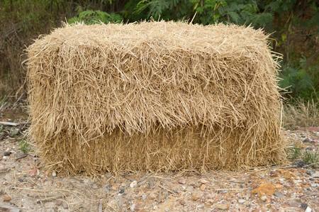 dry straw on the ground Stock Photo