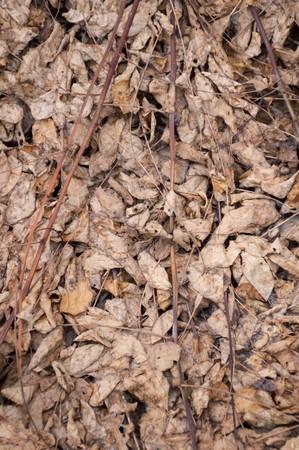 hojas secas: hojas secas en el suelo en el jardín de otoño