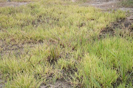 fresh green grass on the ground Stok Fotoğraf