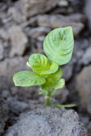 green sprout on the ground