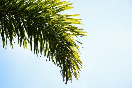 areca: Areca palm leaves in nature garden Stock Photo
