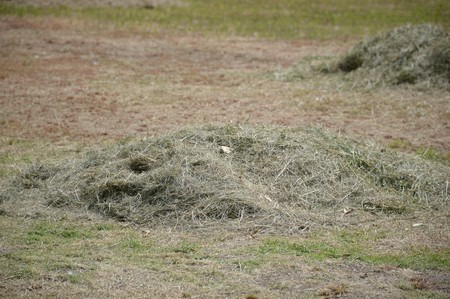 cut grass: pile of freshly cut grass in park