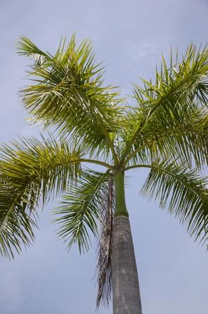areca: areca palm tree in nature garden Stock Photo