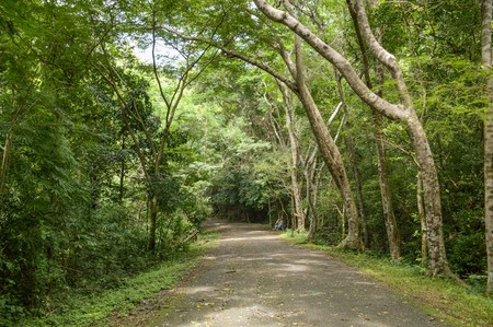 chonburi: road in forest at Chonburi , Thailand Stock Photo