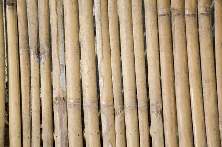 wall texture: dry bamboo wall texture
