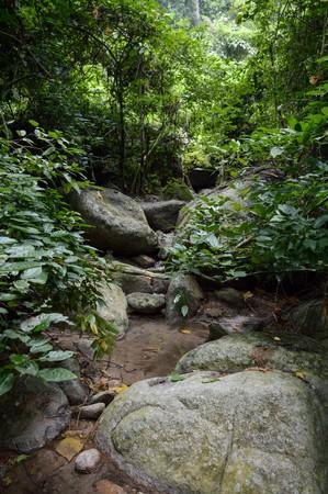 Chantathen forest in Chonburi Thailand Stock Photo