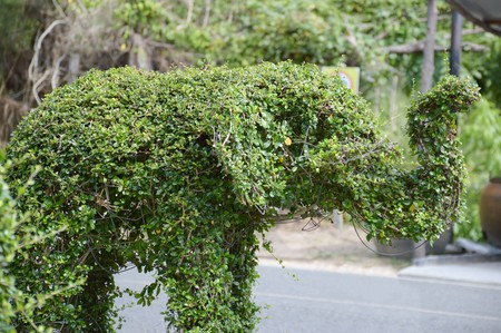 green elephant, dwarf trees