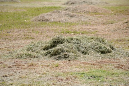 cut the grass: pile of freshly cut grass in park