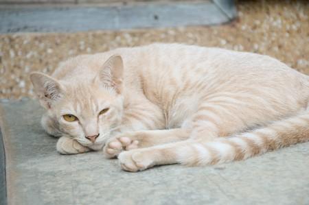 yellow: yellow cat