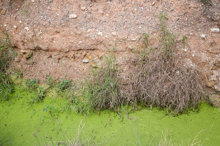 green duckweed and dirt soil