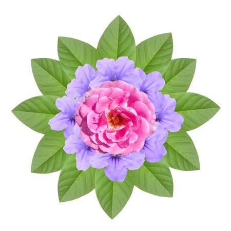 rose and ruellia tuberosa flower on white background