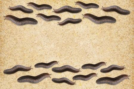 slug on wood floor