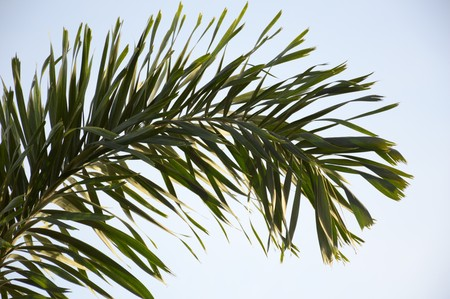 areca: Areca palm leaves in nature garden Stock Photo