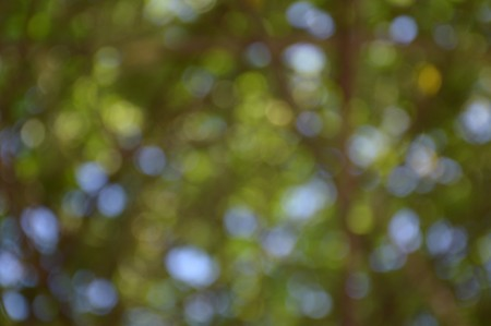 green background: green nature bokeh background Stock Photo