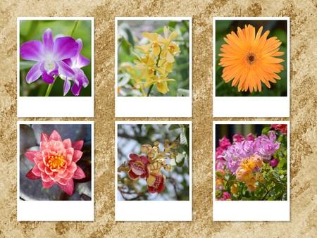 photo beautiful flower on grunge brown background Stock fotó
