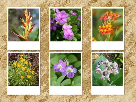 photo flower card on grunge brown background
