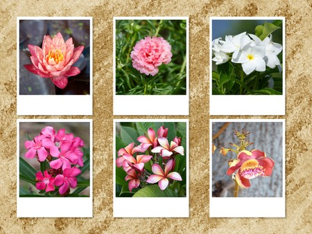 photo flower on grunge brown background