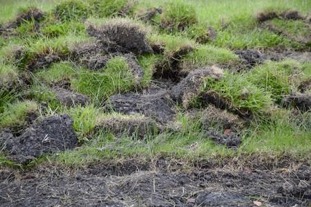 green grass on dry soil