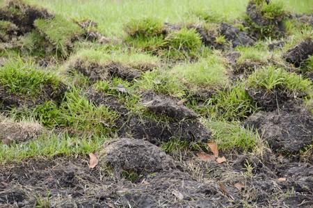 green grass on the ground Stok Fotoğraf