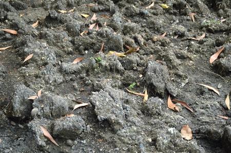 soil texture Stok Fotoğraf