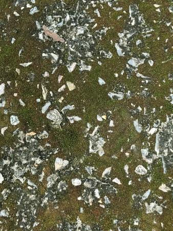 lichen: lichen on stone wall texture