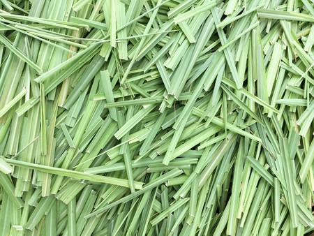 green lemon grass leaves Stock Photo