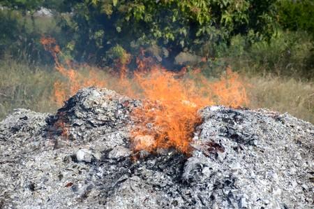 fire burning ash in nature garden
