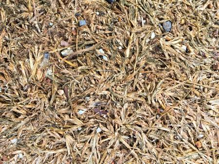 sere: dry grass texture