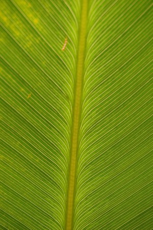 fresh green leaves texture for background Stock Photo
