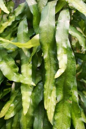 fresh green fern in nature garden