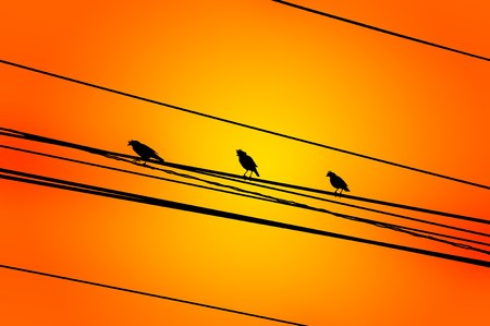 art silhouette bird on cable wire