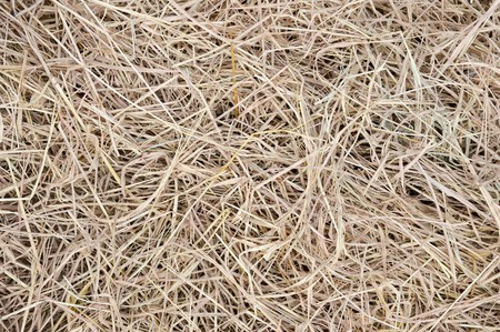 sere: close up dry grass texture Stock Photo