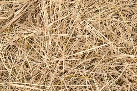 sere: close up hay texture